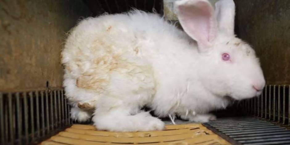 L214 dénonce les conditions de vie de lapins élevés pour leur fourrure
