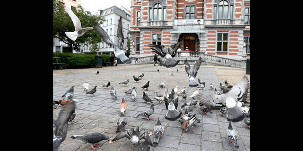 La Ville s'attaque à nouveau aux pigeons - La DH