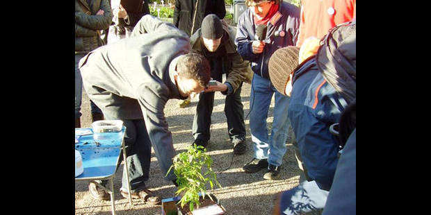 270 membres au cannabis club ! - La DH