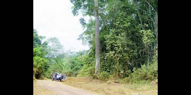 site de rencontre filles de l est gratuit forest
