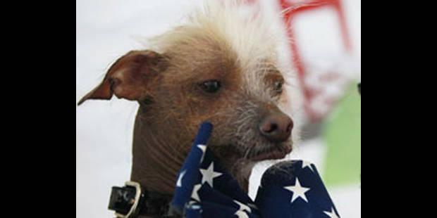 """""""Mugly"""" élu chien le plus laid du monde - La DH"""