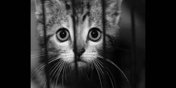 Les chats, victimes d'abandon - La DH