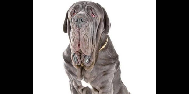 20% des chiens enregistrés proviennent de l'étranger - La DH