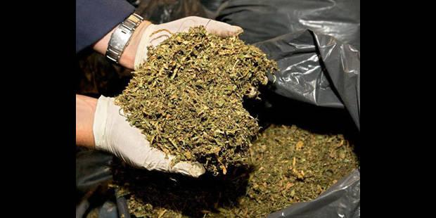 Une interpellation dans le Tournaisis pour culture de cannabis - La DH