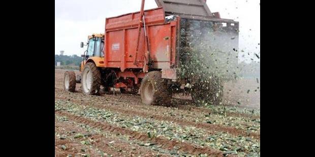 Les revenus des agriculteurs belges en hausse - La DH