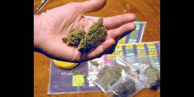 La culture du cannabis en hausse constante depuis dix ans en Belgique - La DH