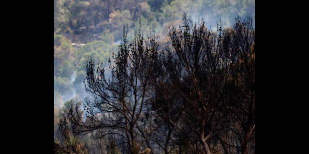 Plus d'un hectare de forêt parti en fumée à Lescheret - La DH
