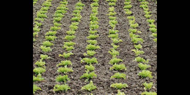 Les voleurs de légumes pillent les potagers des particuliers - La DH