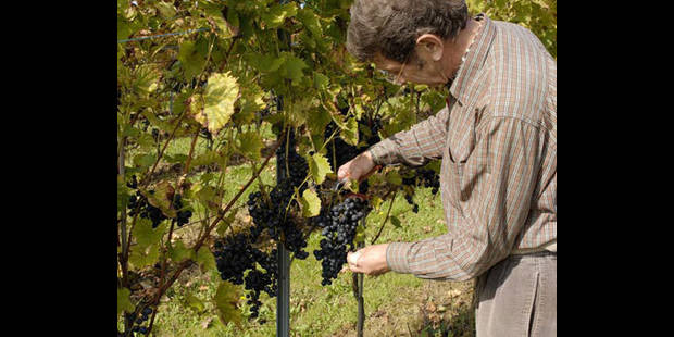 Un vignoble au Beau Site