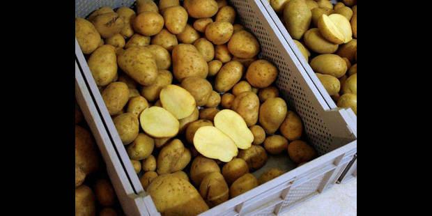 Les pommes de terre plus chères en 2011 - La DH