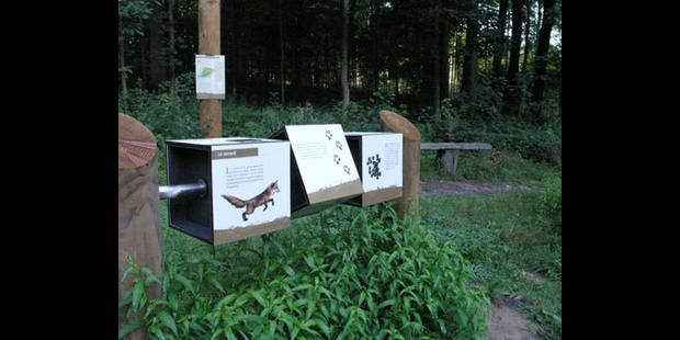 Sur les traces des chevreuils et lapins