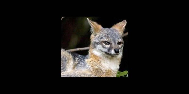 Un renard provoque un accident mortel sur l'A8 - La DH
