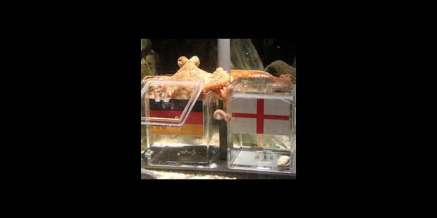 Un poulpe prédit la victoire de l'Allemagne sur l'Angleterre - La DH