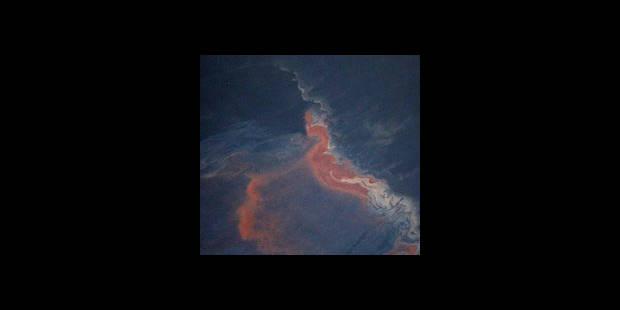 Marée noire: le pétrole a cessé de s'écouler mais la partie n'est pas gagnée - La DH