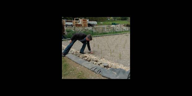 5.000 roseaux épurent l'eau