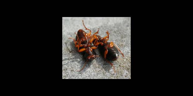 Des coléoptères dans le train pour effrayer ces dames - La DH