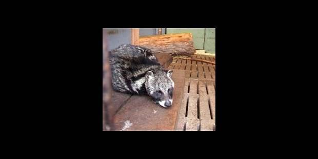 Les zoos belges au pilori