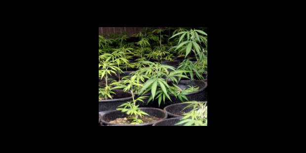 Un incendie révèle une plantation de canabis - La DH