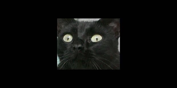 Un chat porteur de la souche H5N1 - La DH