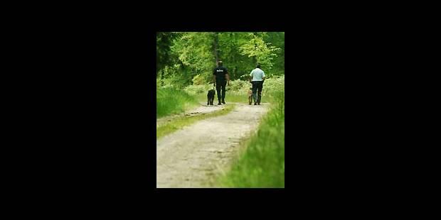 Fin de reconstitution dans les bois de  Nollevaux - La DH
