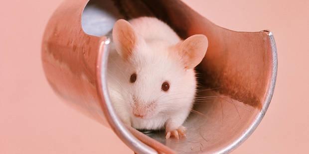 Les animaux de moins en moins utilisés en laboratoire - La DH