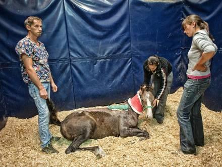 Paard werd aangevallen door de paardenbeul 07/08/2013 PICTURES NOT INCLUDED IN THE CONTRACTS