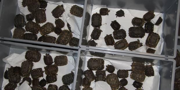 Tortues, caméléons et autres animaux confisqués à Zaventem - La DH