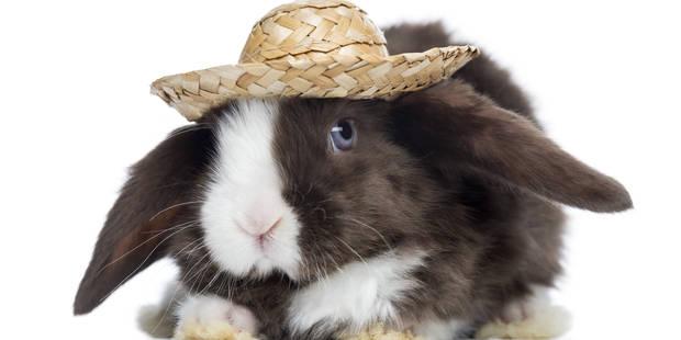 Carrefour ne vendra plus de lapin élevé en batterie - La DH