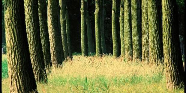 Perdu 48 heures dans la forêt - La DH