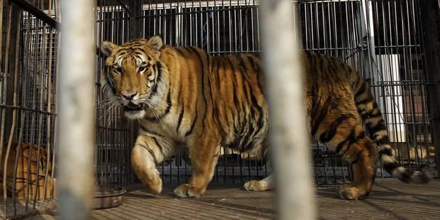 Les animaux sauvages désormais interdits dans les cirques - La DH