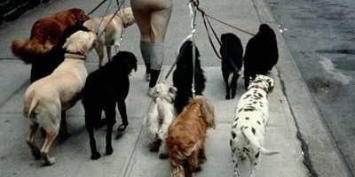 Un petsitter pour votre animal de compagnie - La DH