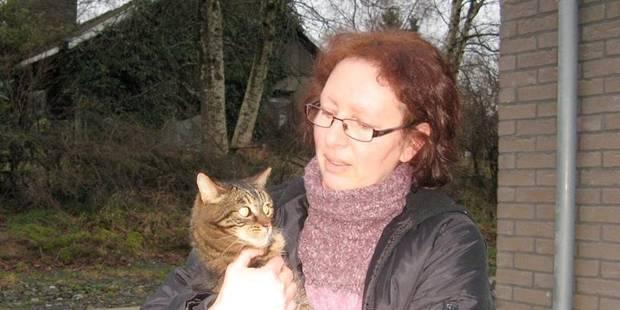 Prolifération des chats à Gouvy - La DH