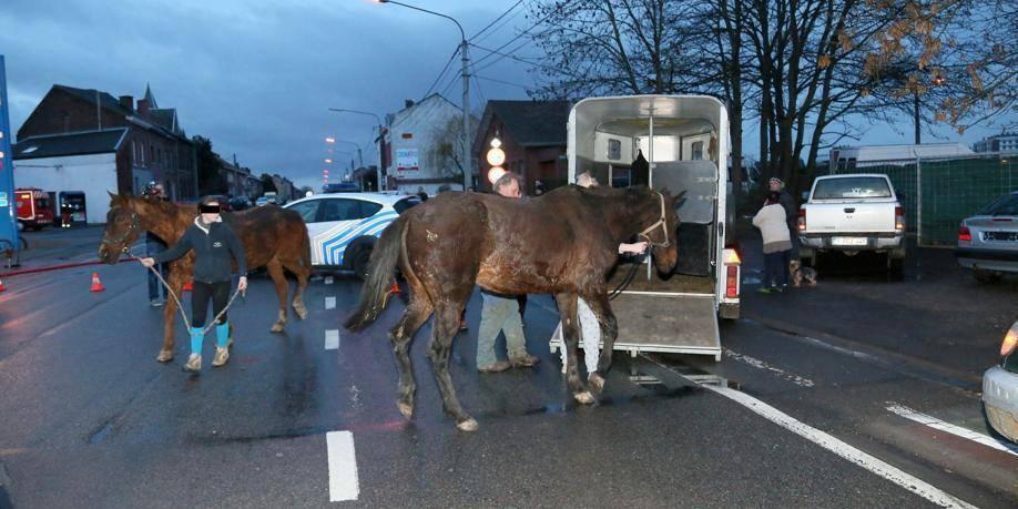 Cinq chevaux ont péri dans les flammes