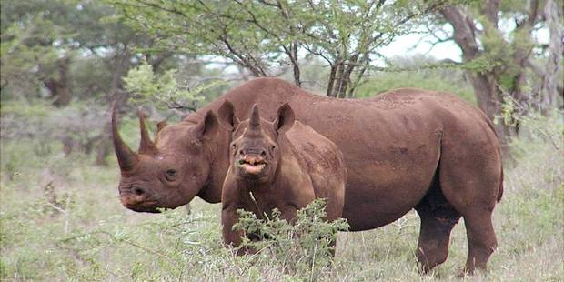 Chasser les rhinocéros en Namibie: 350.000$ - La DH