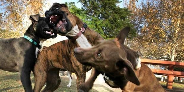 """Le couple qui a sauvé la fillette déchiquetée par 11 chiens a été """"héroïque"""" - La DH"""