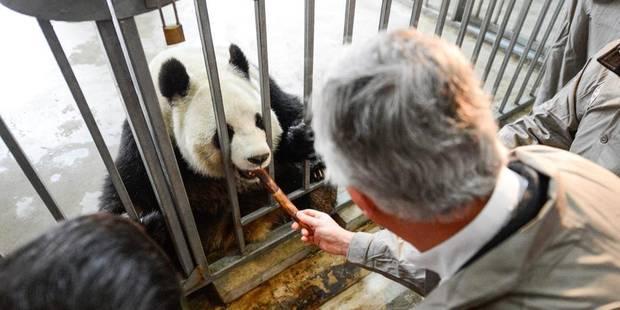 La police escortera les pandas à contrecoeur - La DH