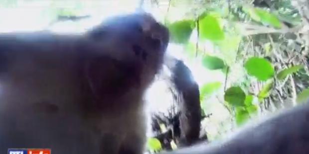 """Un singe fait un """"selfie"""" - La DH"""