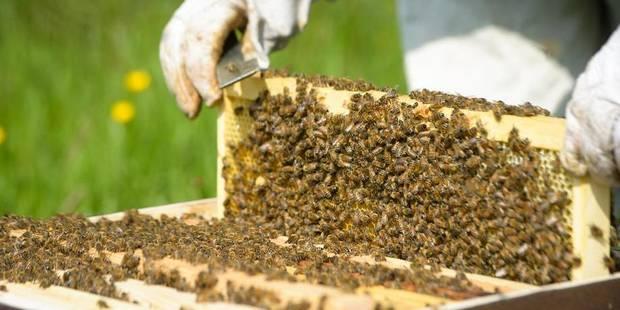 La Belgique, pays européen où le taux de mortalité des abeilles est le plus important - La DH