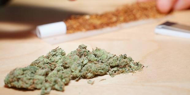 2992 plants et 16 kg de cannabis à Estaimbourg - La DH
