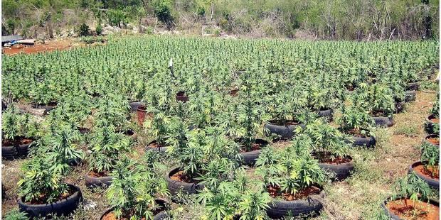Le royaume du cannabis assiégé en Albanie - La DH