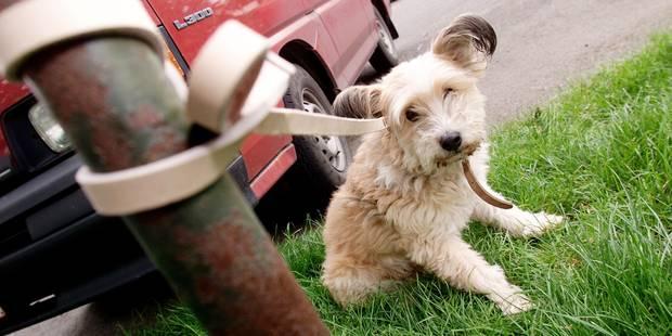 Rencontre pour chien belgique