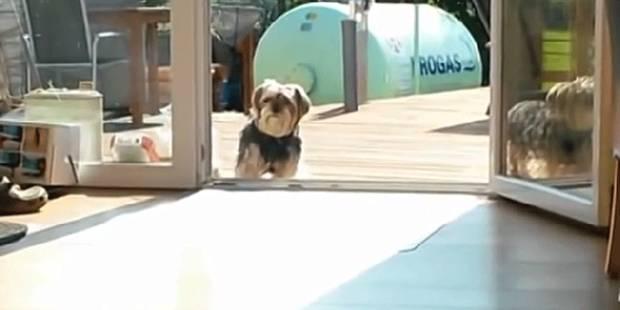 Voici le chien le plus bête du monde - La DH