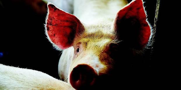 Du porc riche en? Oméga 3 - La DH