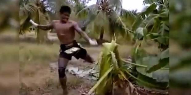 Il casse un arbre à coups de pied ! - La DH