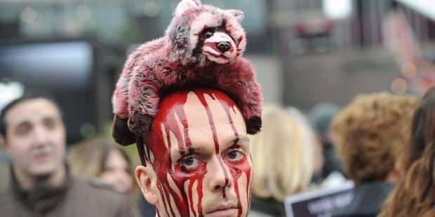 Vers une interdiction d'élevage d'animaux à fourrure en Wallonie - La DH