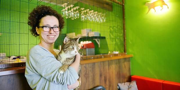 Un bar pour caresser des chats - La DH