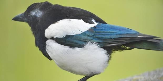 L'Europe a perdu 421 millions d'oiseaux en 30 ans - La DH