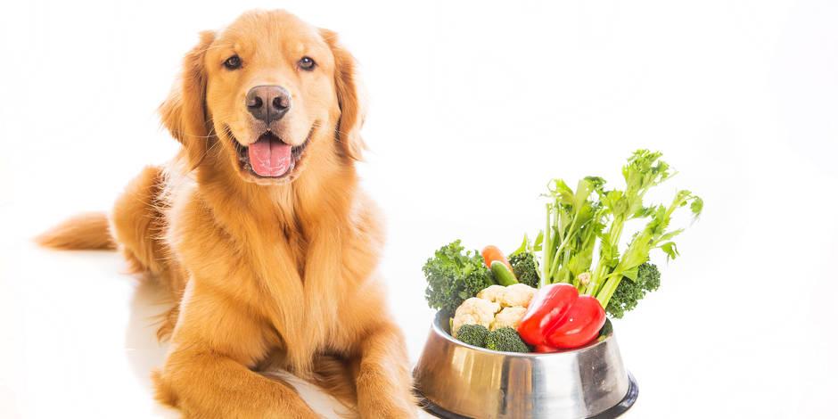 Rencontre vegetarien belgique