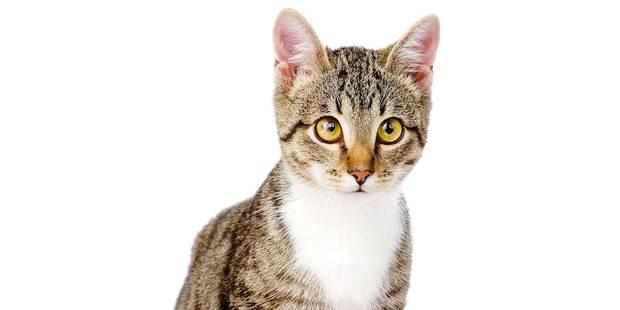 Chats: Halte à la fainéantise du tube digestif - La DH