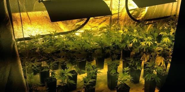 Molenbeek: l'ex-usine de gaufres accueillait du cannabis - La DH